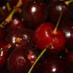 Cherriesandroses2015 017
