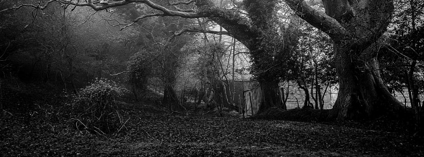 January in the Forest of Dark Delights